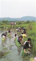 做環保救地球:淡江的學生在關渡自然公園擔任環境保育志工,割除雜草通河道(圖/盧耀欽提供)