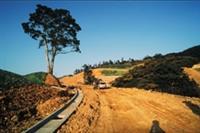 校園中保留多處保育區,圖為林美山上的原生樹種--冬青樹。
