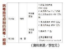 【淡江學術圈】瓦解病毒尖兵 化學系李世元