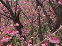 春之饗宴 號召校友呷辦桌