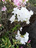 蘭陽校園花景