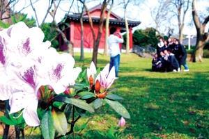 校園內開滿了杜鵑花,到處都是拍照和賞花的人潮,上圖為即將畢業的學生在春暖花開的生態校園,留下美麗的倩影。(攝影�黃士航)