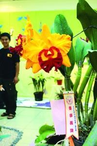 總務處於本週四(3日)起至今天在商館展示廳,舉辦蘭花展,及「淡江.印象.2005」校景攝影比賽得獎作品。