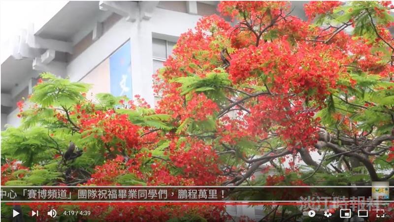 火紅花瓣惹離愁 賽博頻道帶你見證六月依依鳳凰木