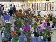 上週商館展示廳來了四、五百盆名種蘭花競豔,配合由同仁提供的書畫作品展出,吸引不少師生前往參觀。(記者劉育孜攝)